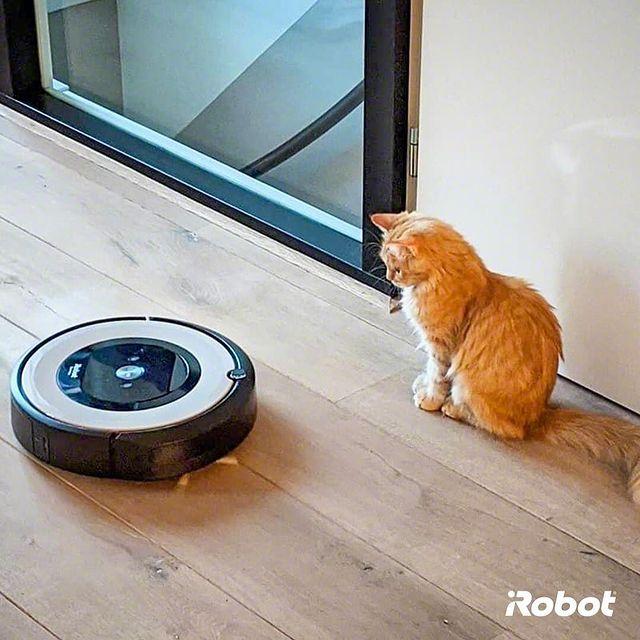 """Bi robot süpürge gördüm sanki."" 🤖😻   #Roomba976 #iRobot #RobotSüpürge"